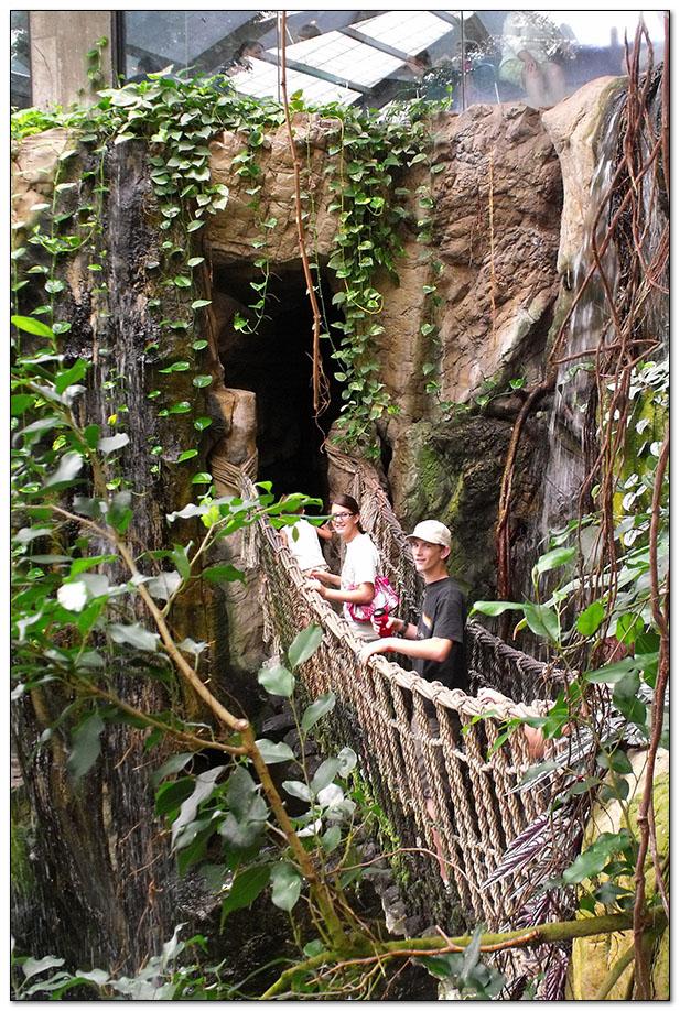 Swinging Rope Bridge in the Jungle