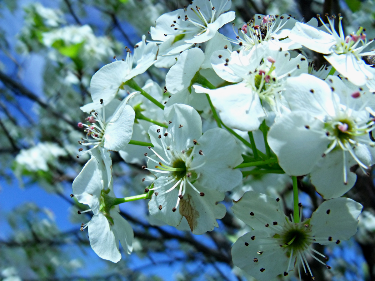 flowering trees Archives 3 Quarters Today