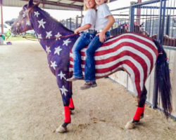 Patriotic Horses at the County Fair